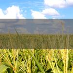 Quanto Custa Uma Faculdade de Agronomia