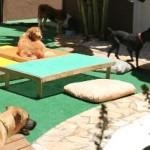 Hotel para cachorro e animais – Preço
