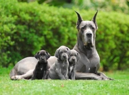 Dog Alemão Preço