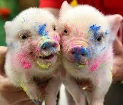 Quanto Custa Um Mini Pig