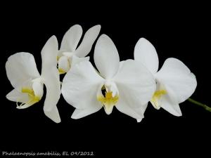 Orquídea - Preço
