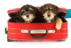 Hotel para cachorro e animais - Quanto custa