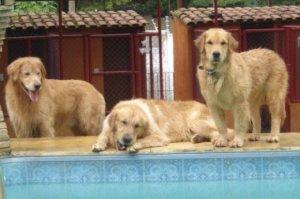 Hotel para cachorro e animais - Preço