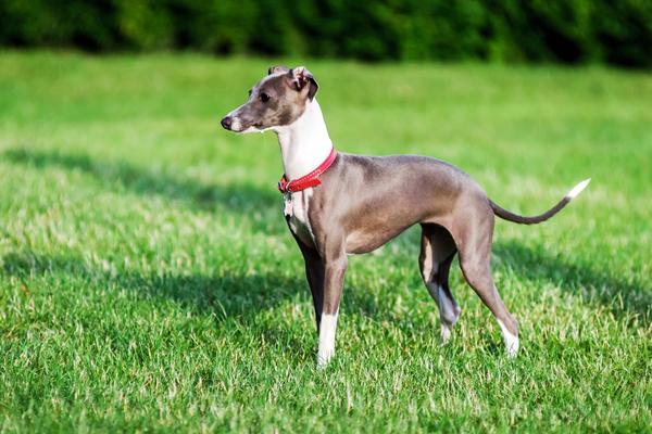 Greyhound - Quanto custa