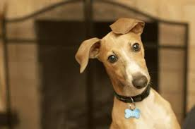 Greyhound - Preço