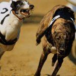 Greyhound – Preço
