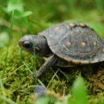 Tartaruga – Preço, como cuidar