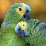 Quanto custa um Papagaio? Preço e Cuidados